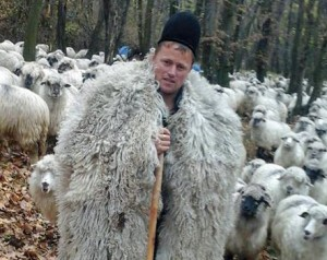 shepherd_01